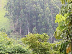 Rallenta la deforestazione