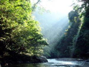 Dal 1990 persi 420 milioni di ettari di foresta
