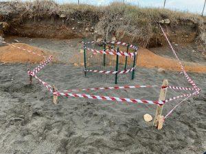 Spostato a Campo di Mare il nido della caretta caretta