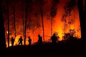 Incendi boschivi, allarme di RomaNatura