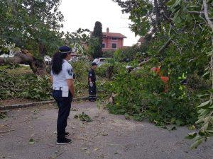 Tarquinia, alberi caduti e stabilimenti allagati