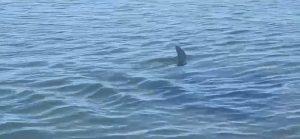 Pinna in mare, paura per sospetto squalo: parapiglia sul litorale di Montalto
